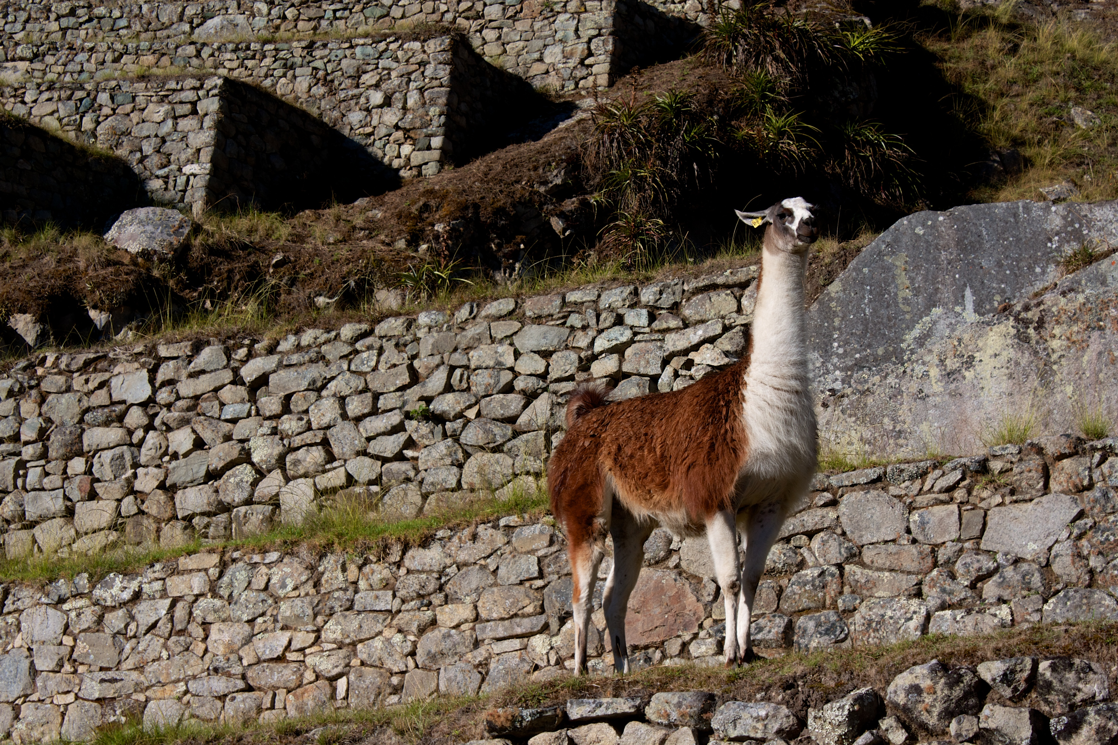 the gallery for  gt  inca accomplishments